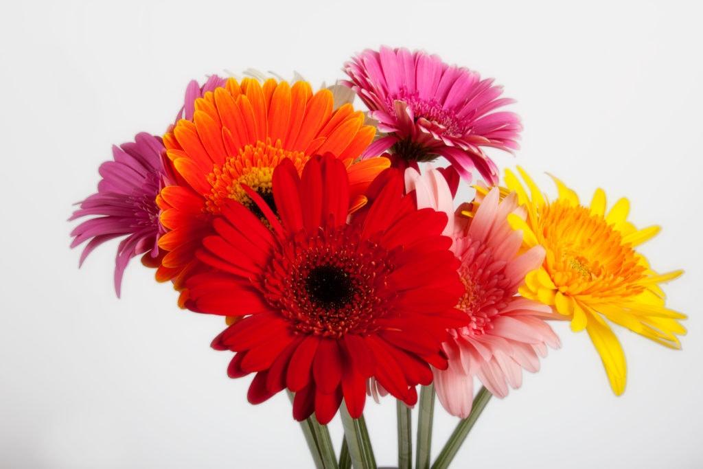 Idées cadeaux aux profs Fleurs