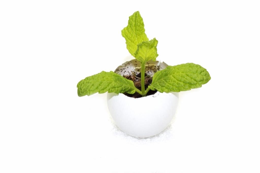 Idées cadeaux aux profs une plante