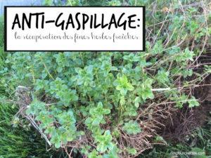 faire sécher les fines herbes Cinq Fourchettes