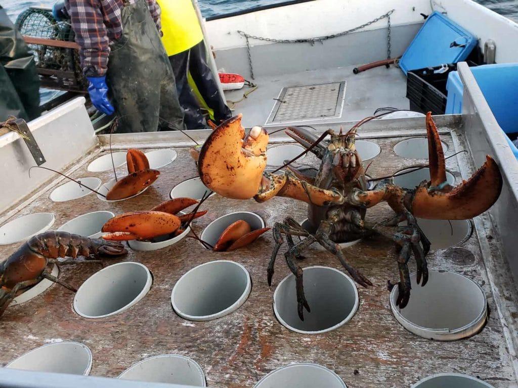 La gastronomie des Îles-de-la-Madeleine Cinq Fourchettes